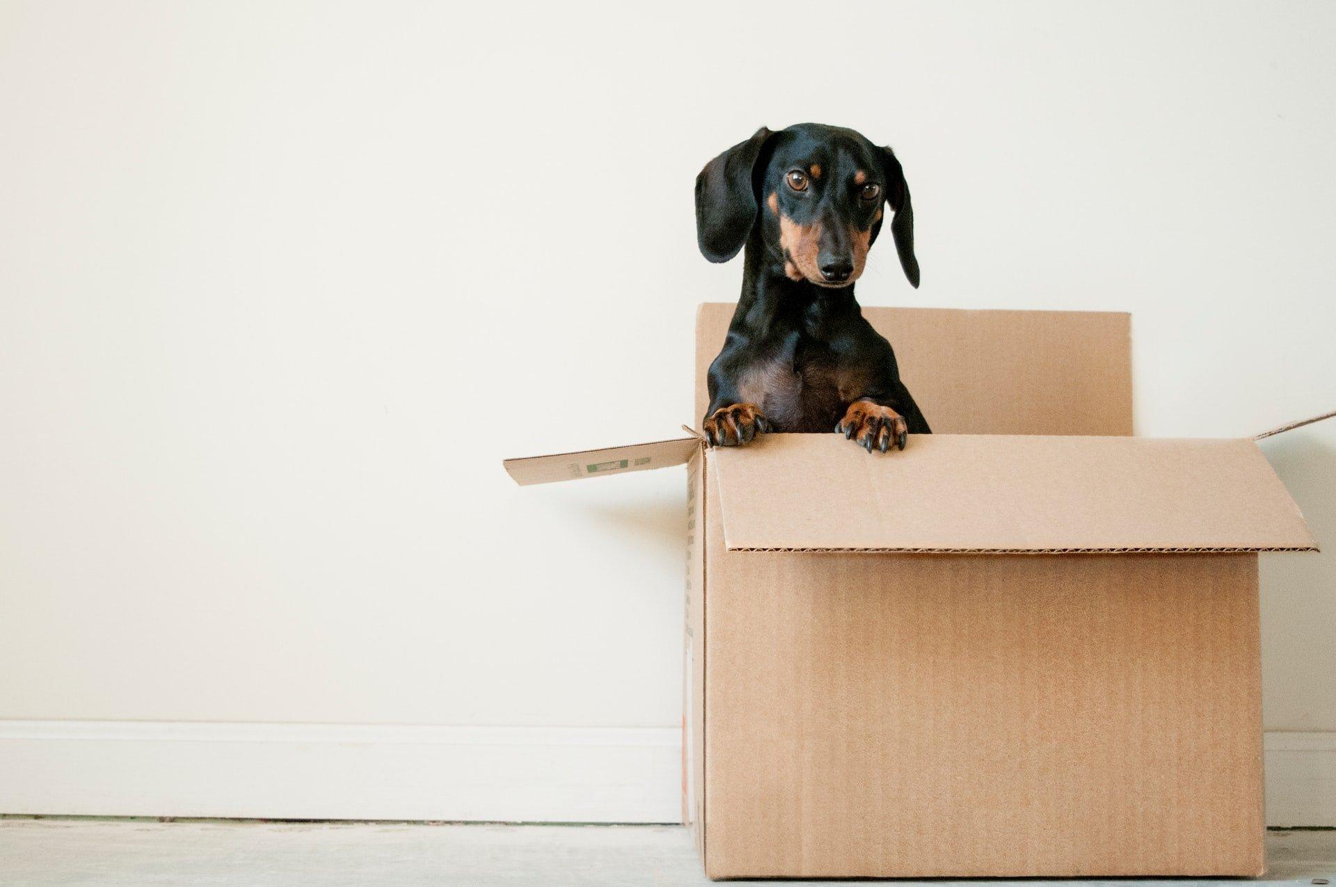 A dog in a cardboard box.
